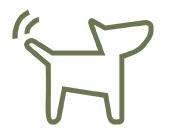 Hundetræning, jagttegn og skydekurser